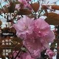 [Instaweather]WeatherShot(2020-04-09)