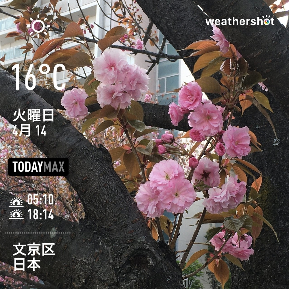 WeatherShot(2020-04-14)