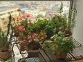 [植物][園芸](2020-04-18)