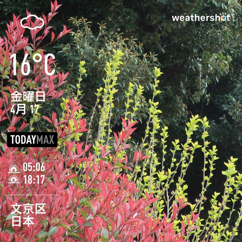 WeatherShot(2020-04-17)