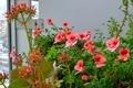 [園芸][花](2020-04-21 15:14)