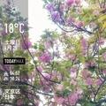 [Instaweather]WeatherShot(2020-04-25)