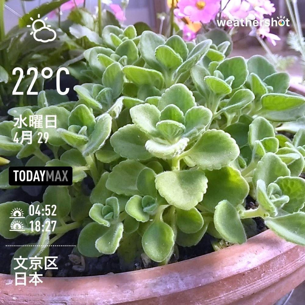 WeatherShot(2020-04-29)
