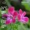 WeatherShot(2020-05-03)