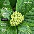 [Instaweather]WeatherShot(2020-05-11)