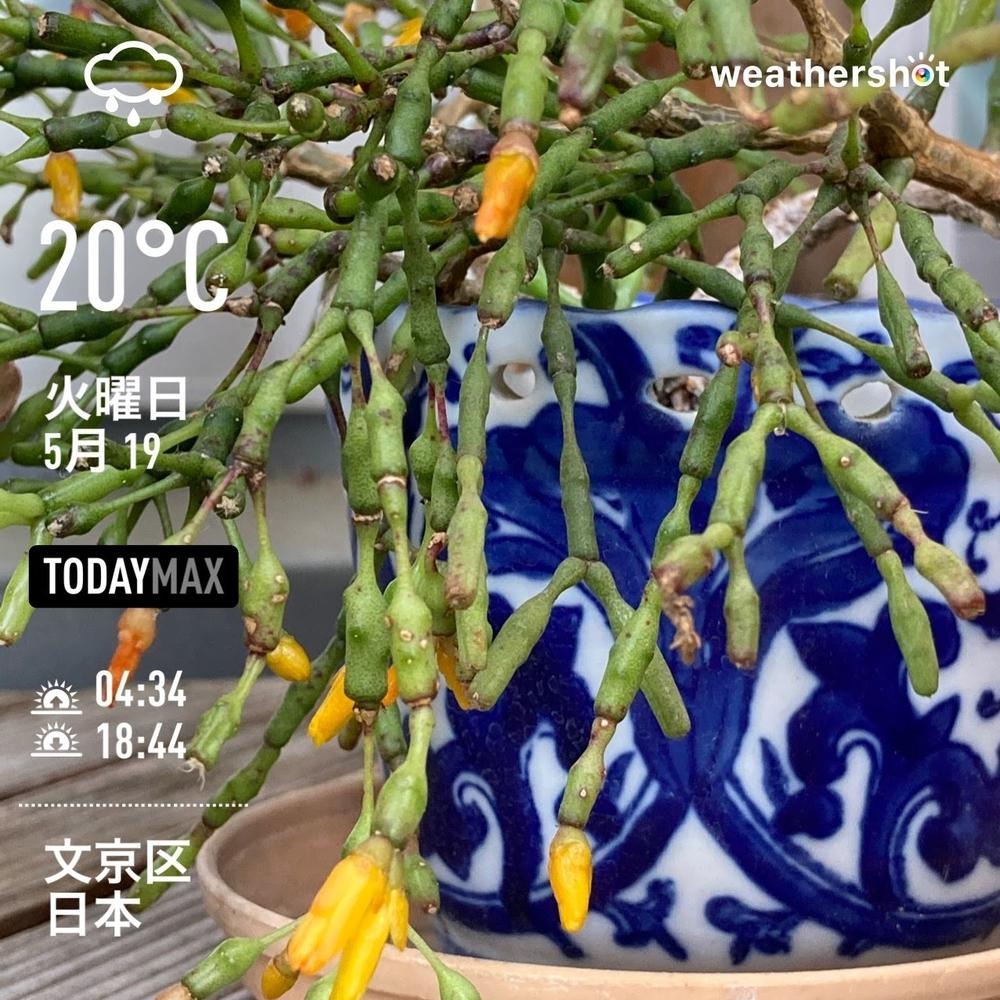 WeatherShot(2020-05-19)