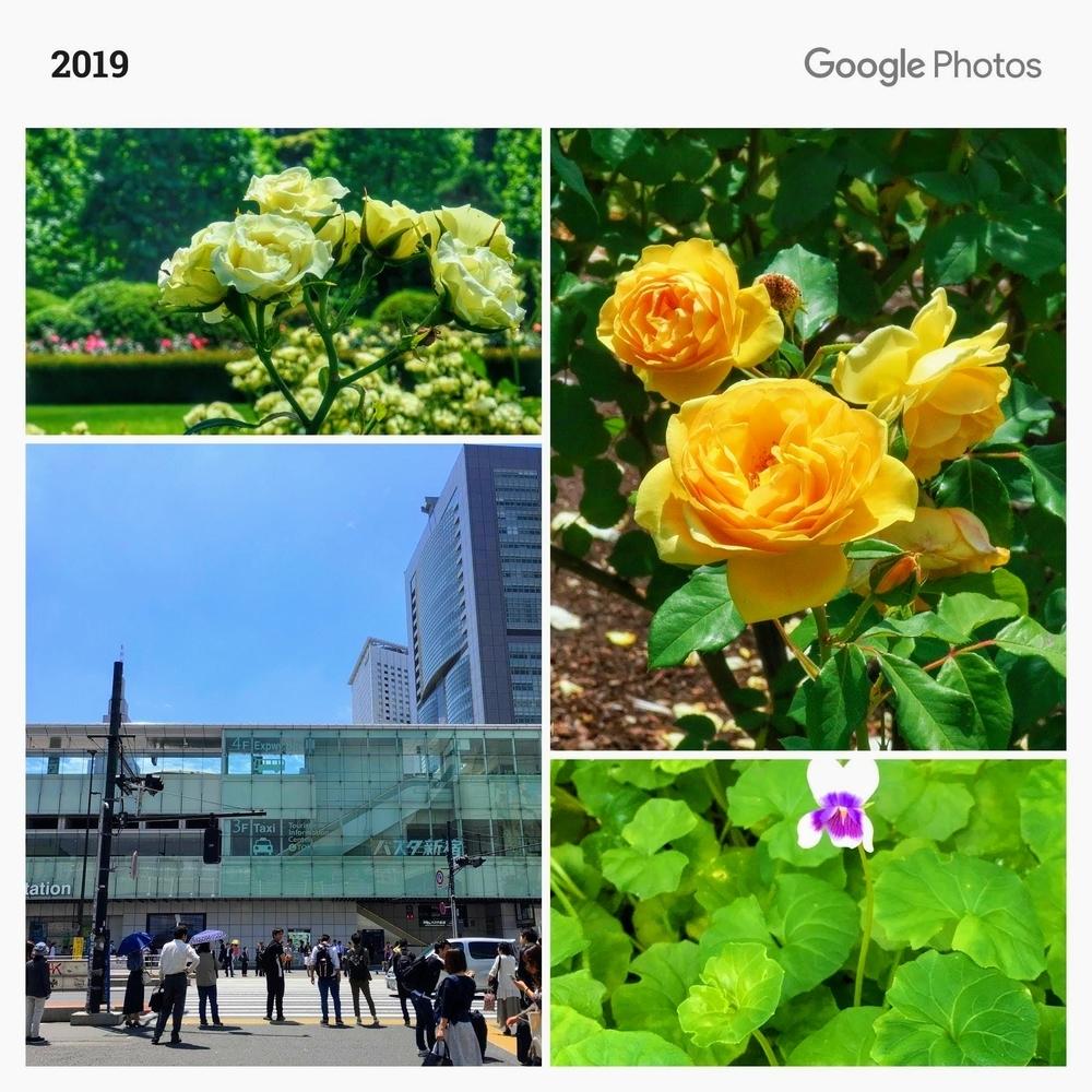 新宿御苑(2019-05-22)
