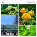 [公園][東京][この日の思い出]新宿御苑(2019-05-22)