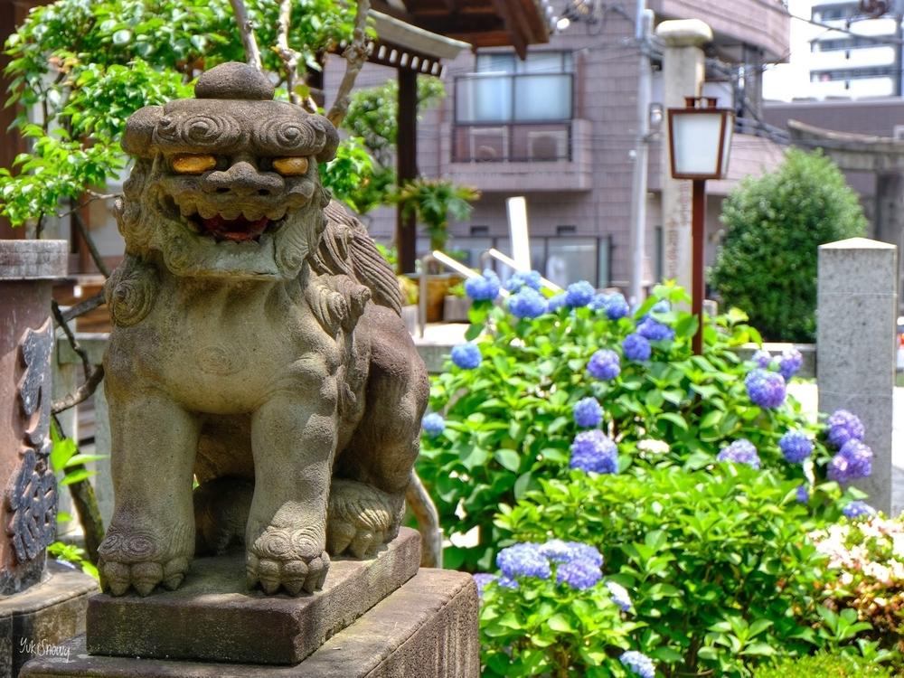 白山神社(2020-06-03)