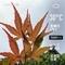 WeatherShot(2020-06-05)