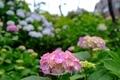 [花][植物]白山神社古墳(2020-06-03)