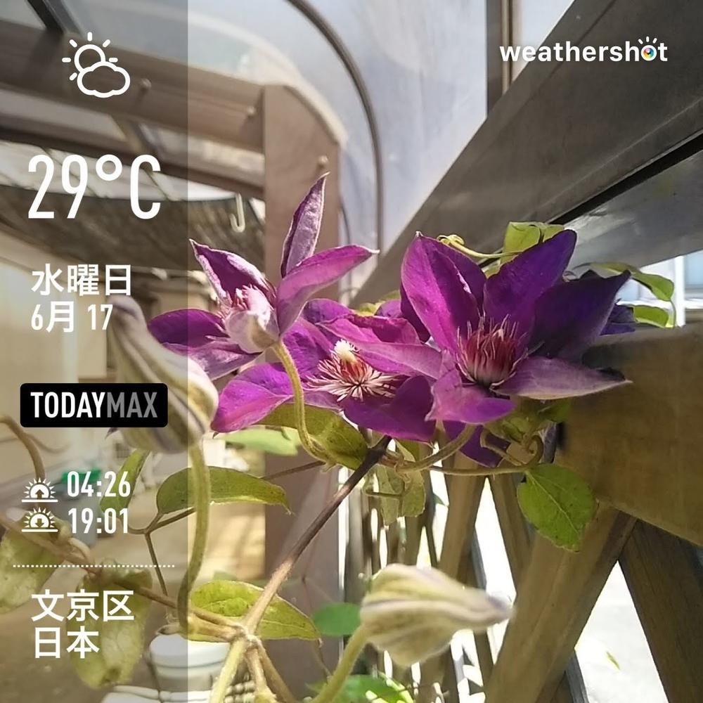 WeatherShot(2020-06-17)