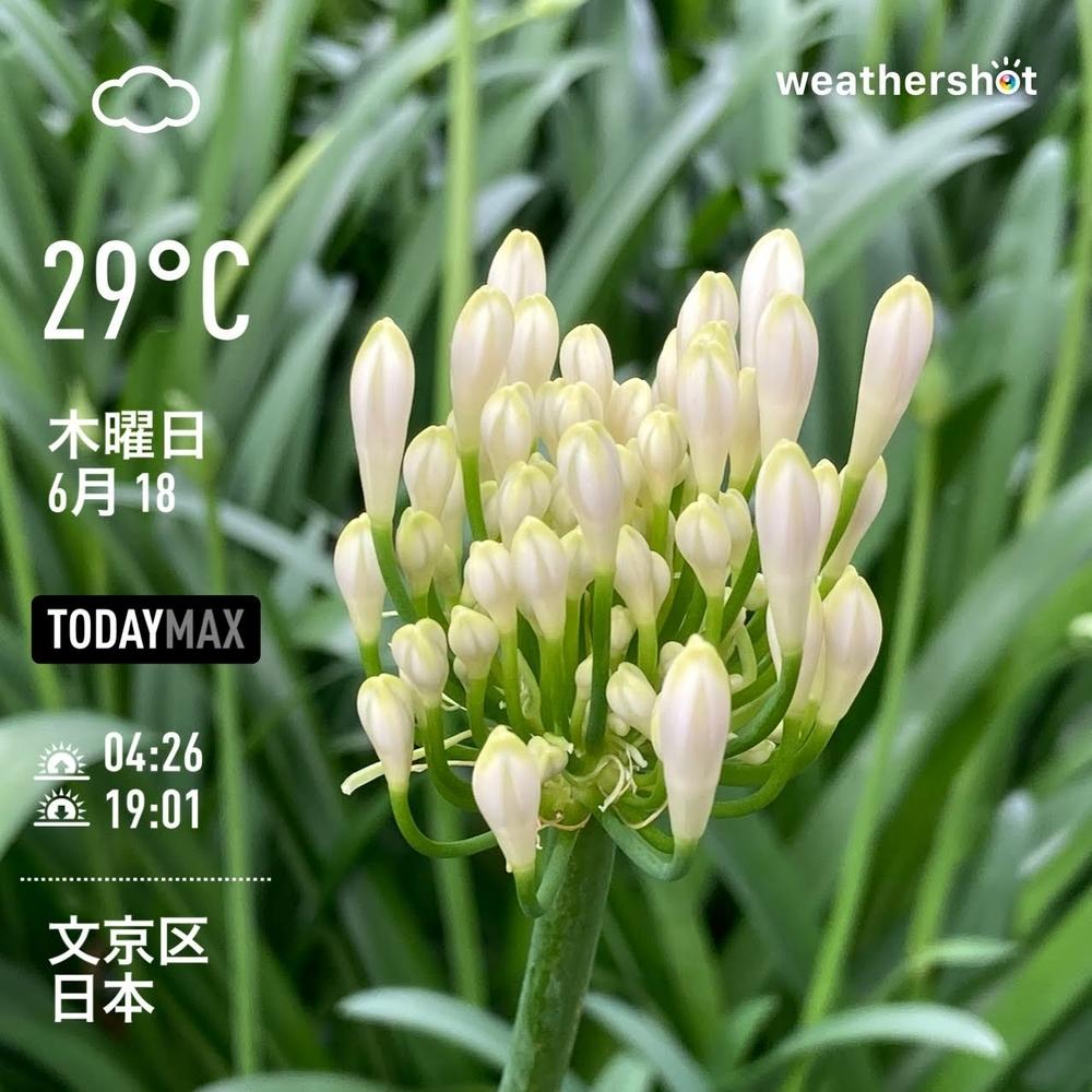 WeatherShot(2020-06-18)