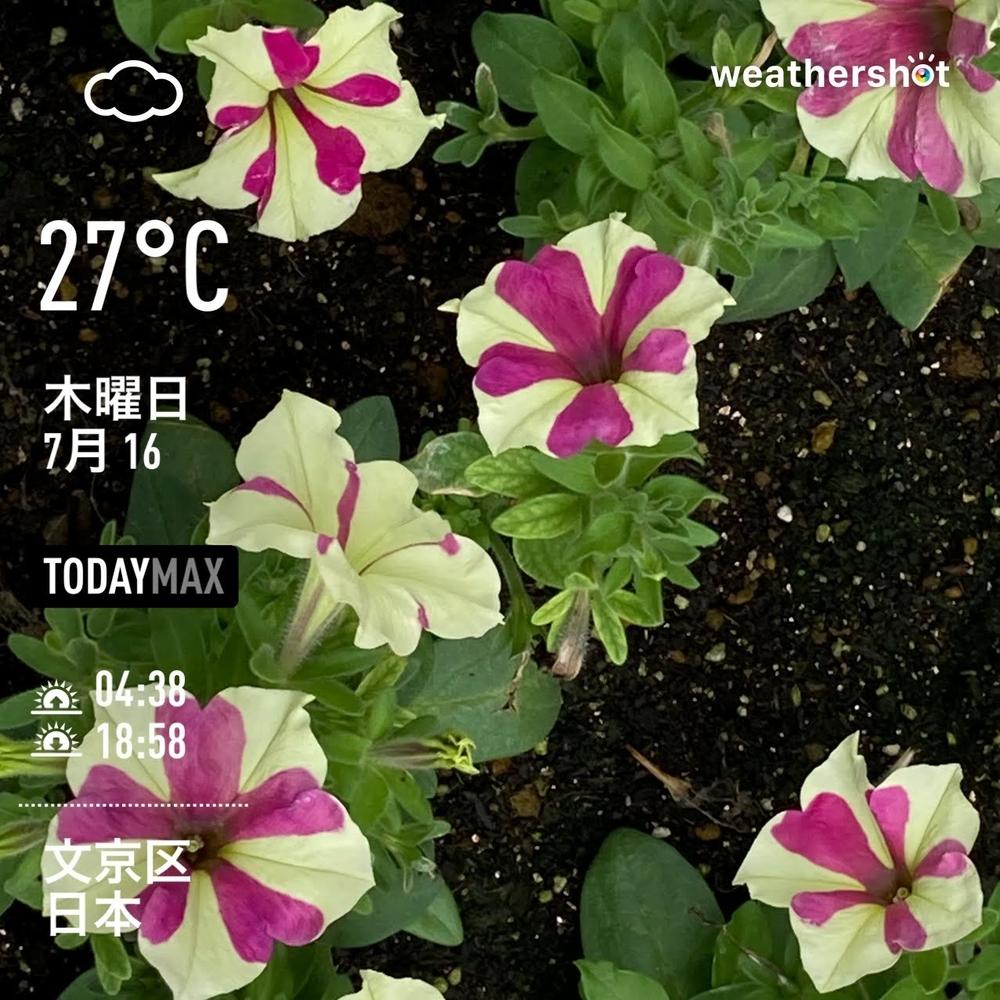 WeatherShot(2020-07-16)