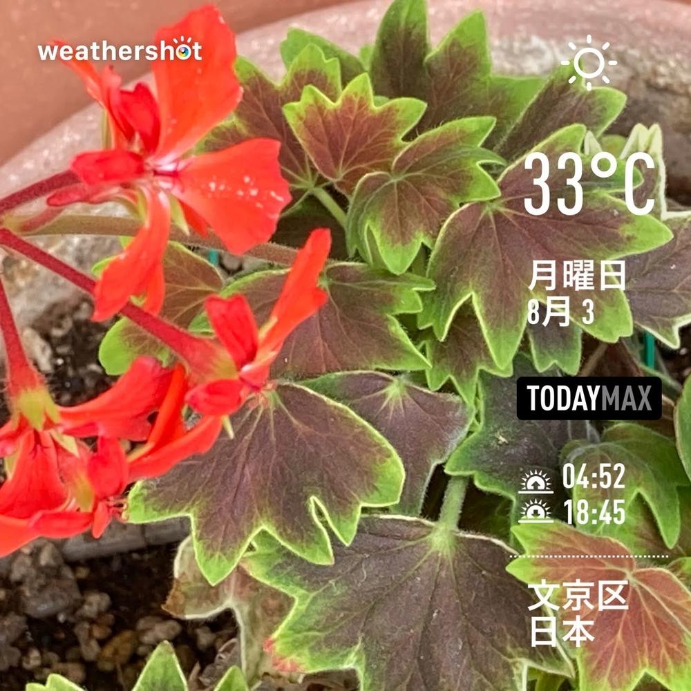 WeatherShot(2020-08-03)