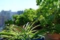 [園芸][植物](2020-09-28)
