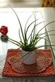 [植物][室内]エアプランツ チランジア(2020-09-29)