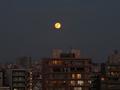 [空][東京][月]満月(2020-11-30 16:46)