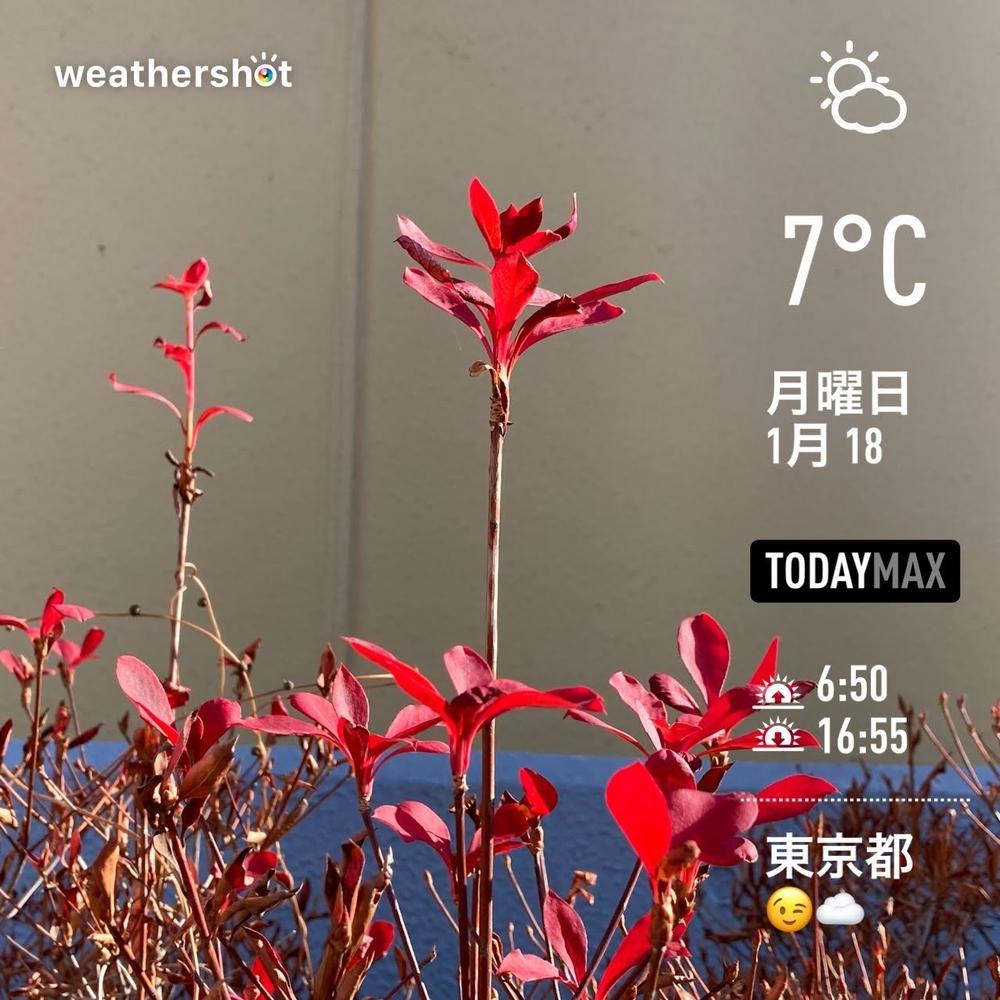 WeatherShot(2021-01-18)