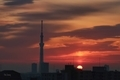 [日の出][空][雲][東京][朝][大気光学現象]太陽柱(2021-01-22 06:51)