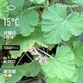 [Instaweather]WeatherShot(2021-02-15)