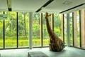 [室内]窓とキリン@放送大学文京学習センター(2021-04-03)