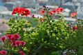[園芸][花](2021-04-19)