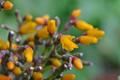 [園芸][花]リプサリス(2021-04-22)