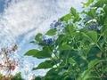 [花]赤字坂にて(2021-06-18)