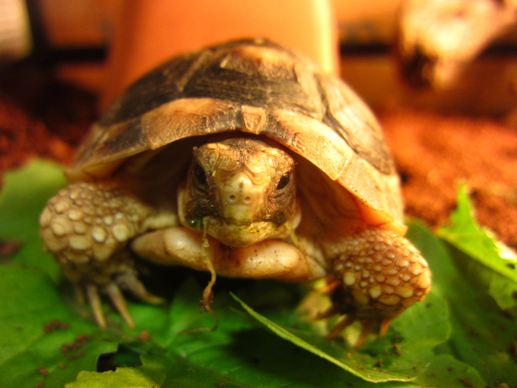 f:id:Sophora_tortoise:20160828011129j:plain