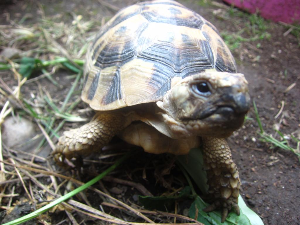 f:id:Sophora_tortoise:20160828011314j:plain
