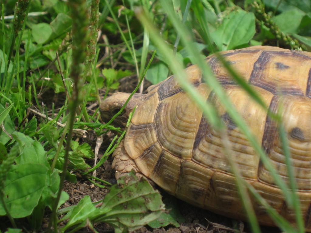 f:id:Sophora_tortoise:20160828011428j:plain