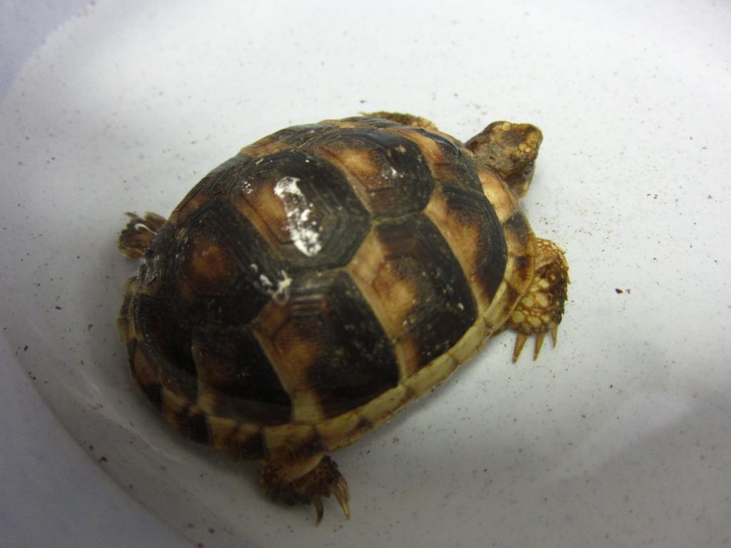 f:id:Sophora_tortoise:20160828013221j:plain