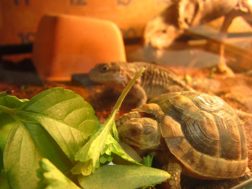 f:id:Sophora_tortoise:20160828102334j:plain