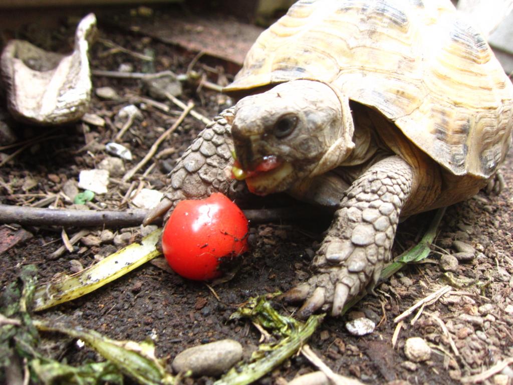 f:id:Sophora_tortoise:20160828102709j:plain