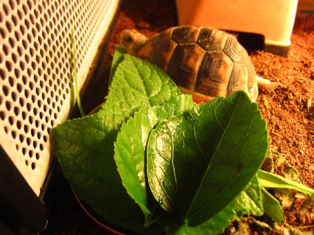 f:id:Sophora_tortoise:20160828102944j:plain