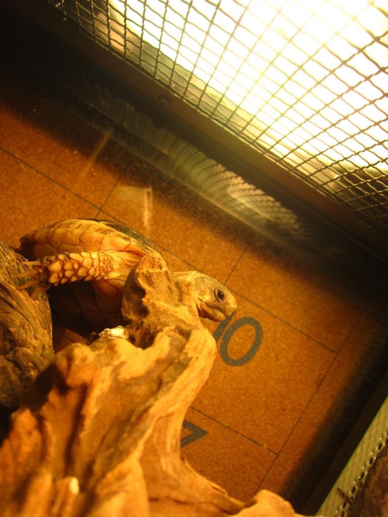f:id:Sophora_tortoise:20160828103247j:plain