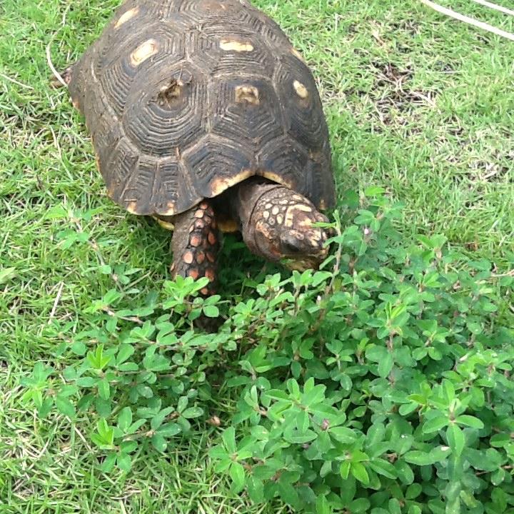 f:id:Sophora_tortoise:20160911173809j:plain