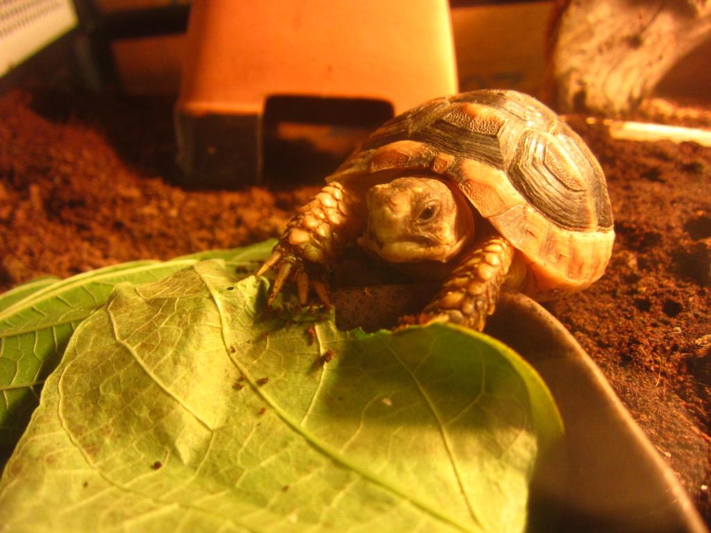 f:id:Sophora_tortoise:20160925231945j:plain
