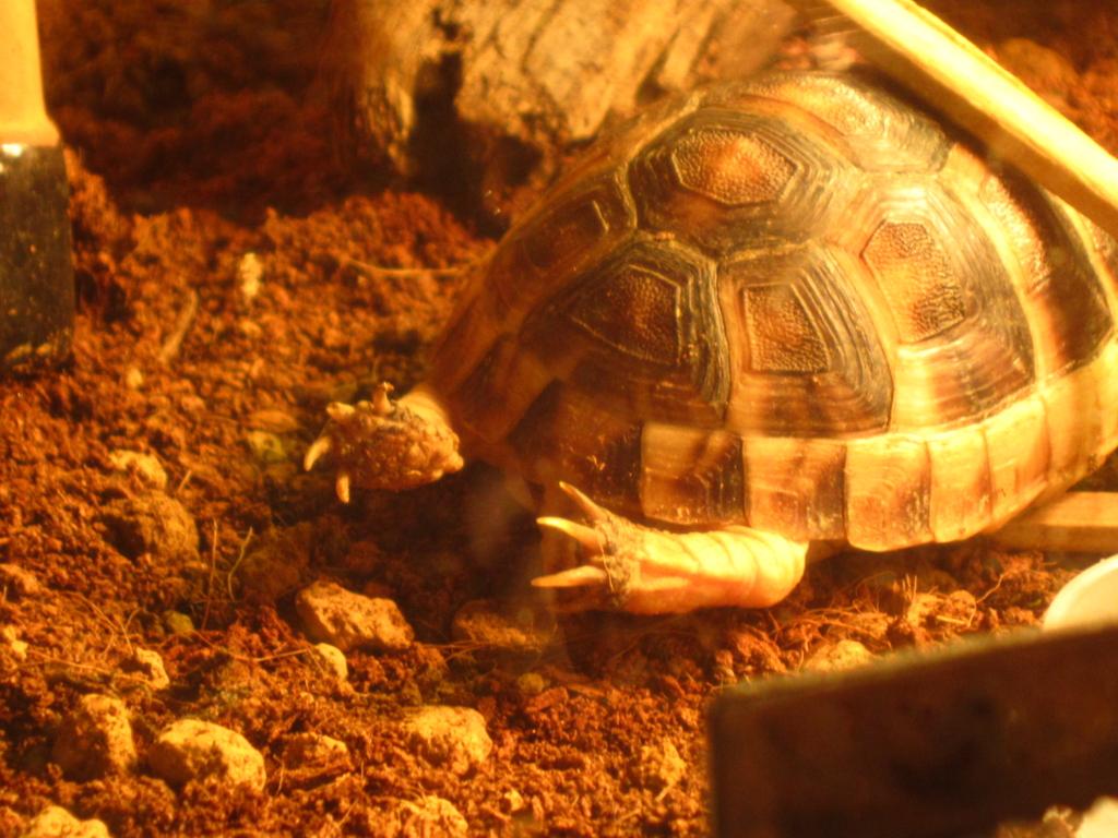 f:id:Sophora_tortoise:20161010213420j:plain
