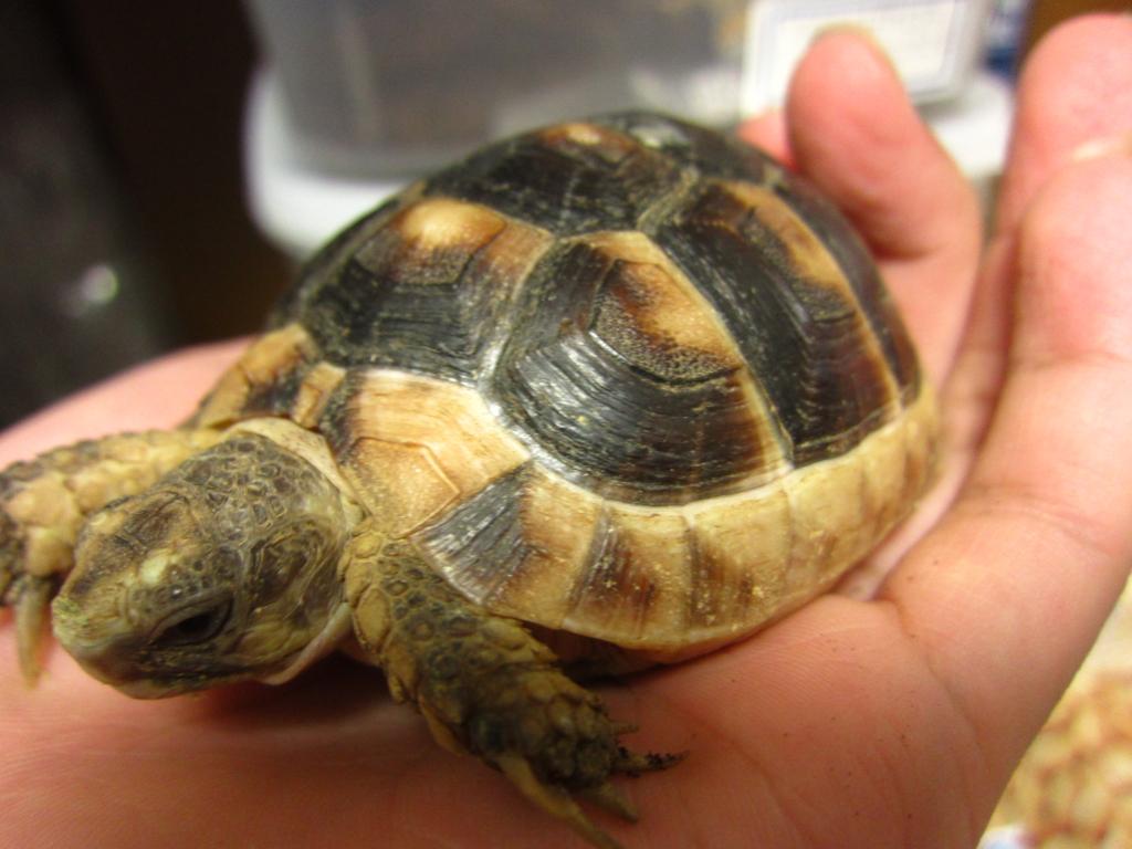 f:id:Sophora_tortoise:20161017031533j:plain