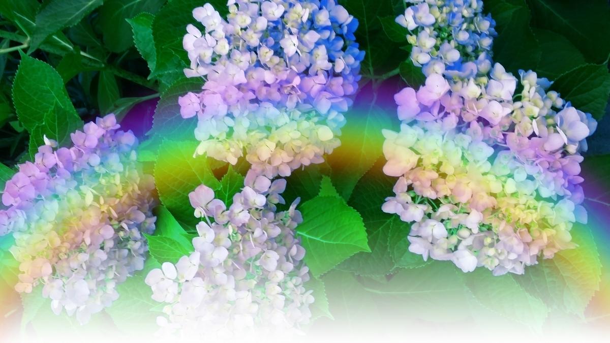 紫陽花と虹:Soseki21ブログ