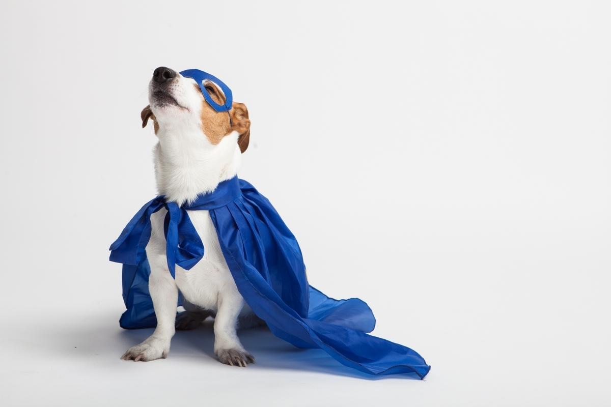 イヌのヒーロー:Soseki21ブログ