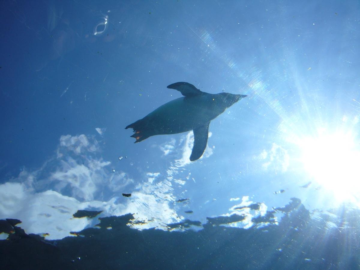 泳ぐペンギンと空:Soseki21ブログ