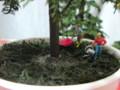 [針葉樹][完成]マン盆栽風に