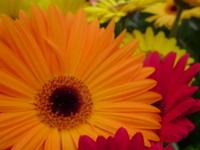 f:id:Star-Mo:20080502162012j:image