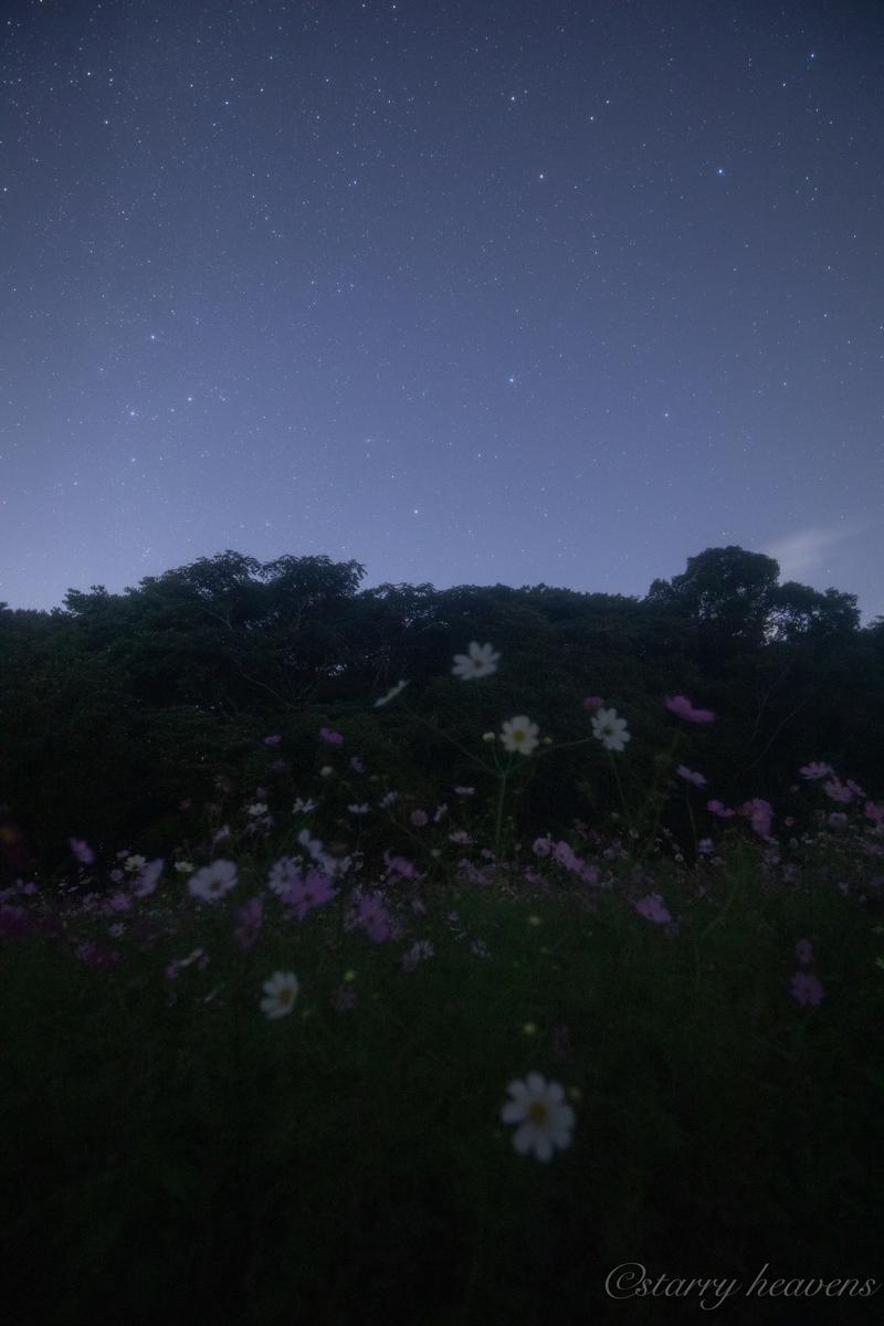 f:id:Starryheavens:20191020153812j:plain