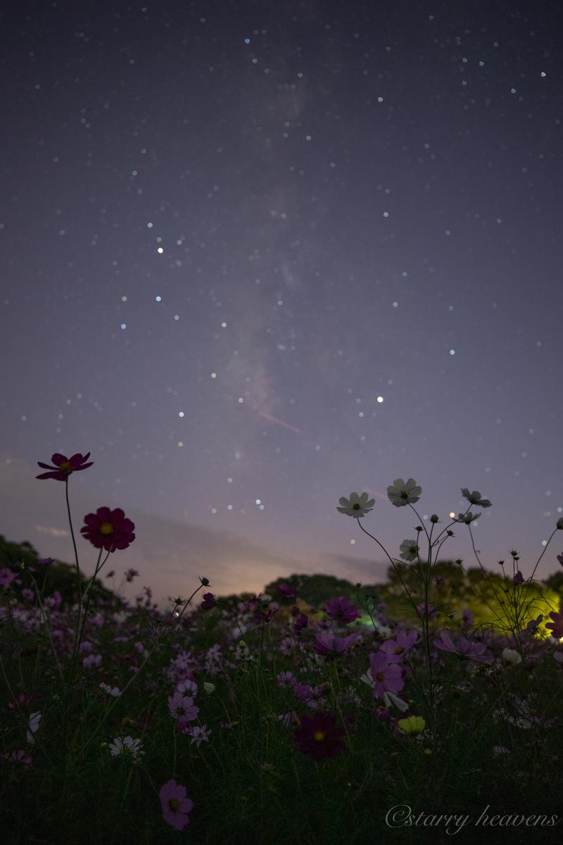 f:id:Starryheavens:20191020153944j:plain