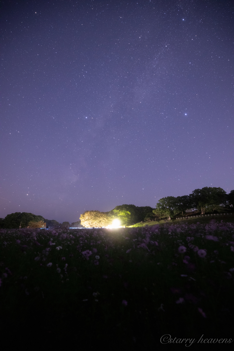 f:id:Starryheavens:20191102162601j:plain