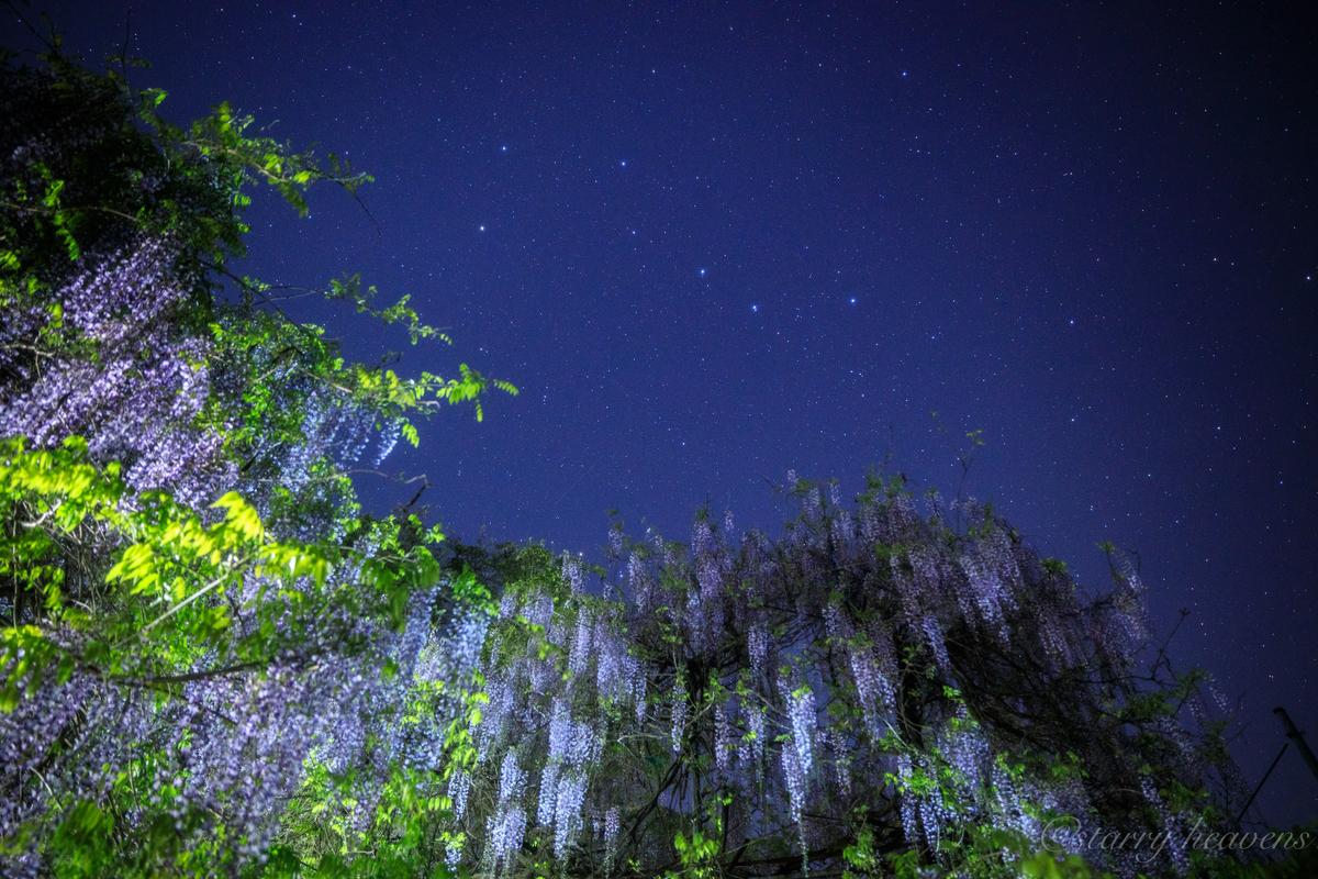 f:id:Starryheavens:20200502162132j:plain